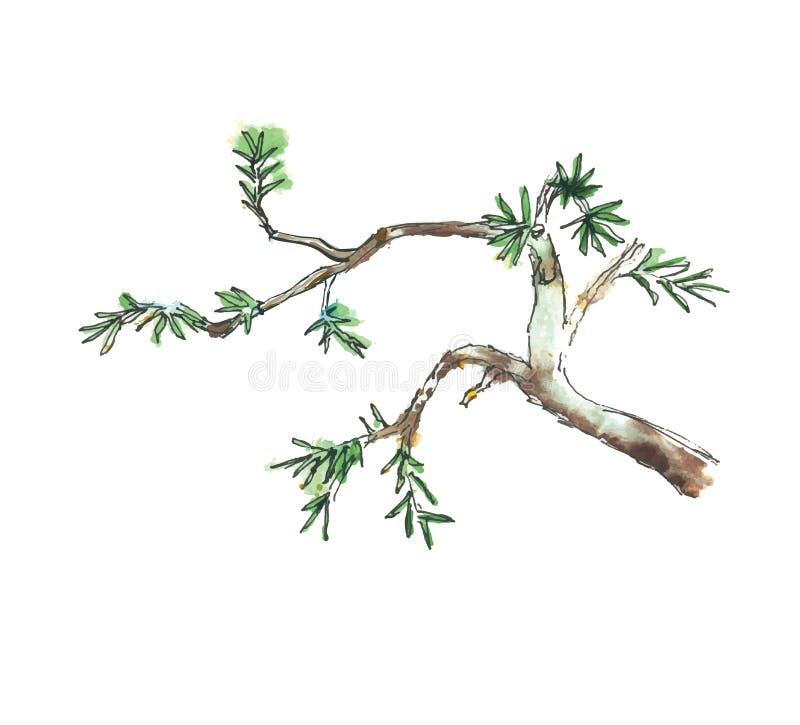 Ветвь дерева можжевельника, иллюстрации вектора иллюстрация штока