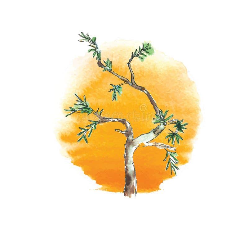 Ветвь дерева можжевельника против солнца, вектор бесплатная иллюстрация