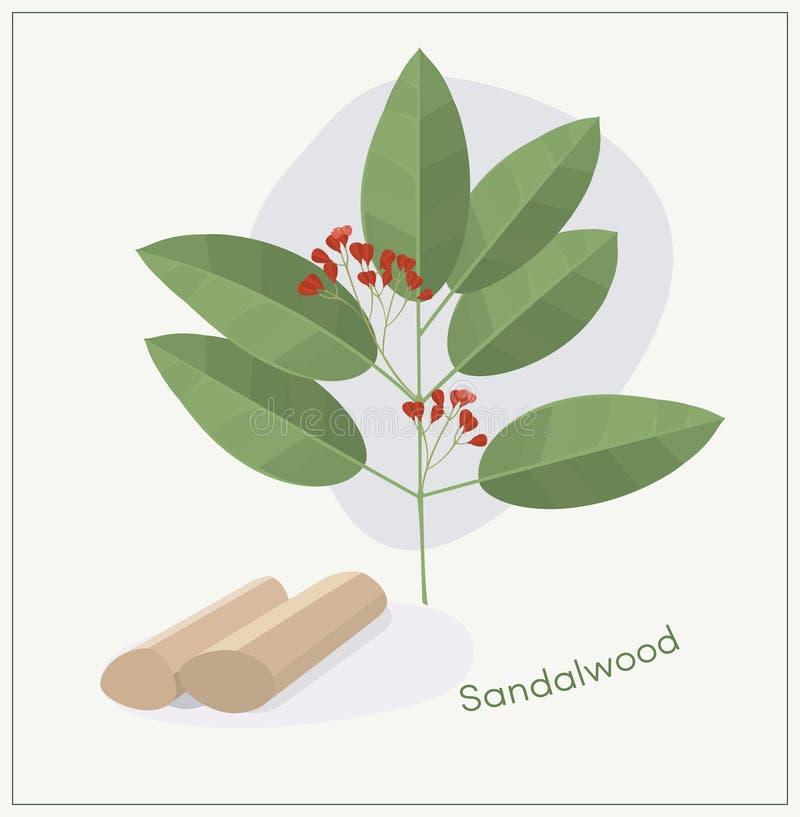 Ветвь дерева сандаловых деревьев бесплатная иллюстрация