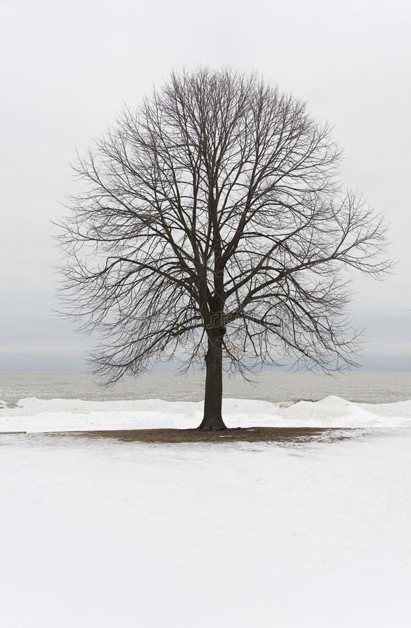 Ветвь дерева стоковые фото