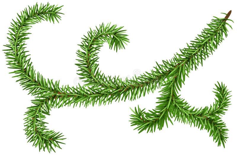 Ветвь ели украшения для венка рождества сосенка ветви зеленая иллюстрация вектора