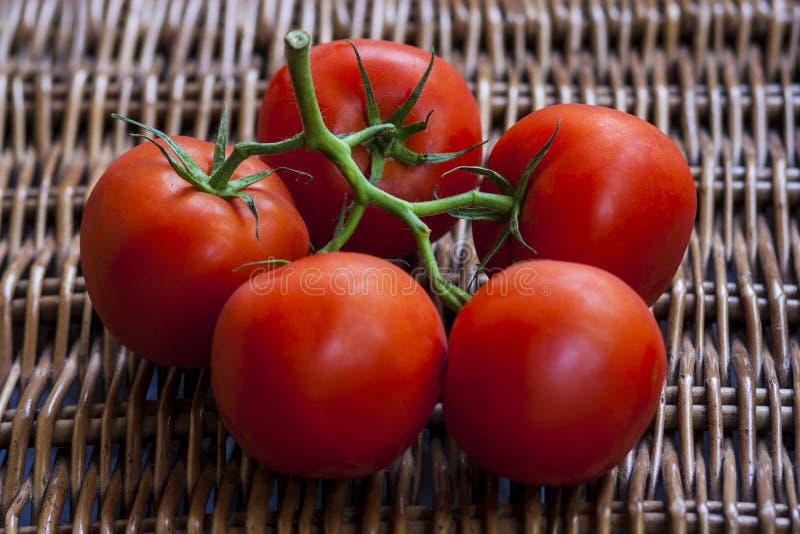 Ветвь зрелых томатов стоковые изображения