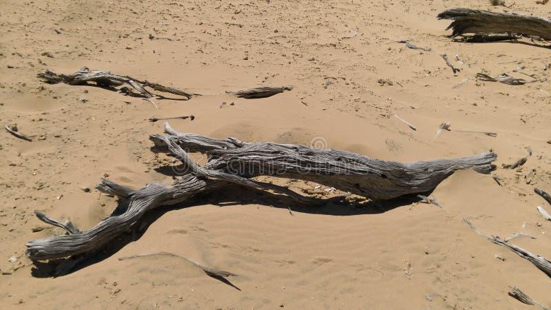 Ветвь и песок стоковое изображение rf