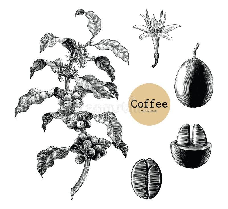 Ветвь кофе, цветок кофе, год сбора винограда cli чертежа руки кофейного зерна иллюстрация штока