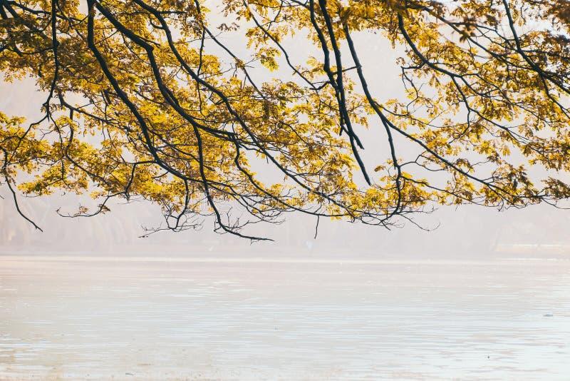 Ветвь листьев осени над предпосылкой озера в солнечном дне в парке стоковые изображения