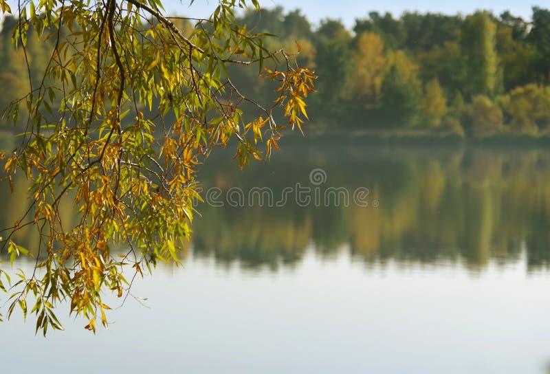 Ветвь над водой Осень стоковое изображение rf