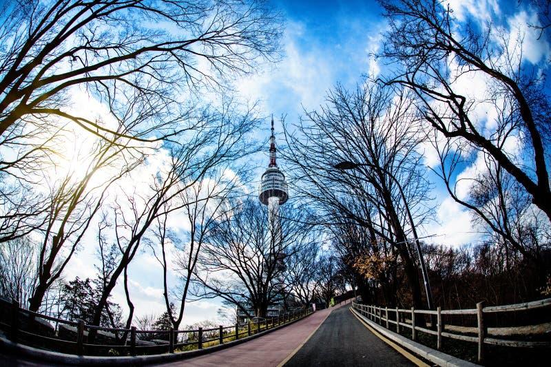 Ветвь неба и дерева Большинств красивый вид башни Сеула на зиме в Корее стоковые фотографии rf