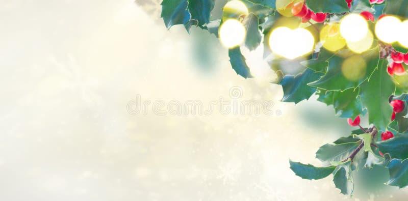 Ветвь падуба на серой предпосылке стоковая фотография rf