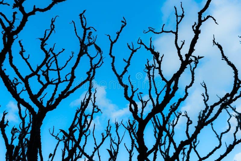 Ветвь растя к небу стоковая фотография rf
