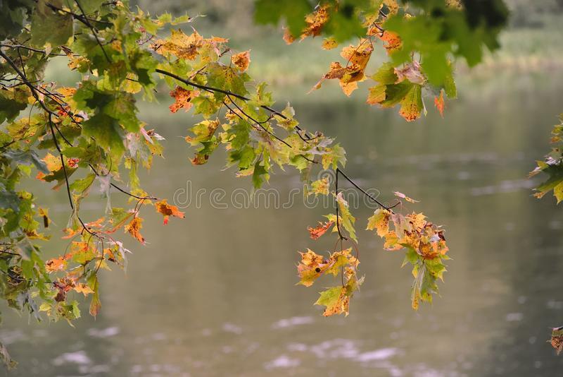 Ветвь реки стоковое фото