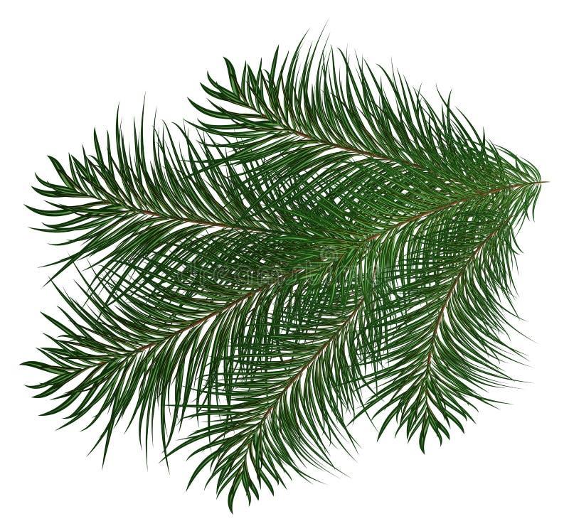Ветвь рождественской елки и иллюстрация сосен бесплатная иллюстрация
