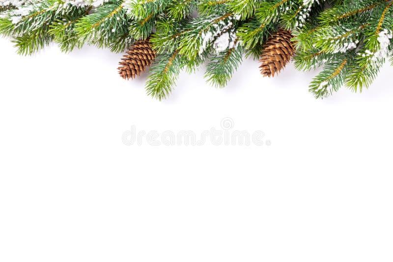 Ветвь рождественской елки с конусами снега и сосны стоковое фото rf