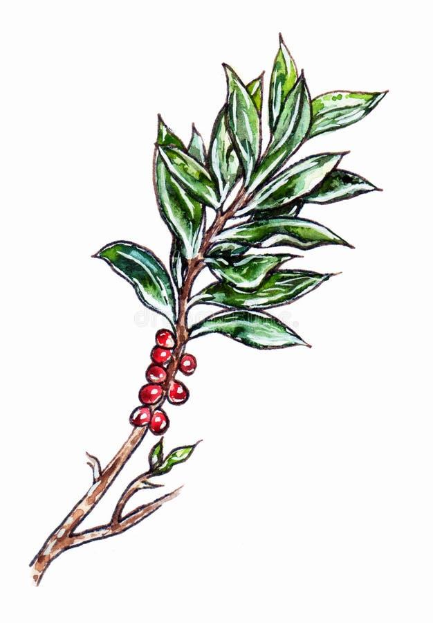 Ветвь руки вычерченная с зелеными листьями и красными ягодами иллюстрация штока