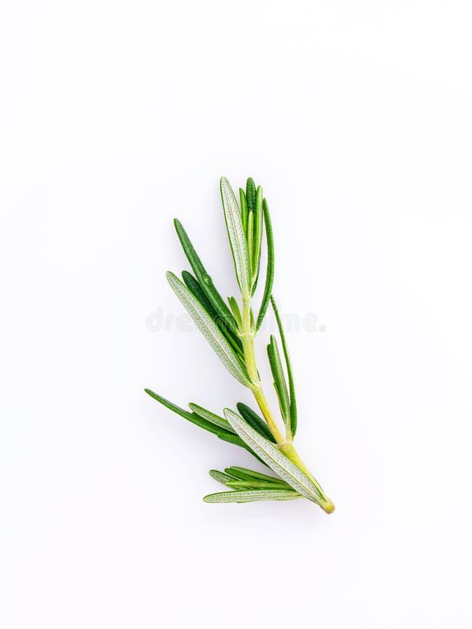 Ветвь свежего розмаринового масла изолированная на белой предпосылке стоковое фото rf