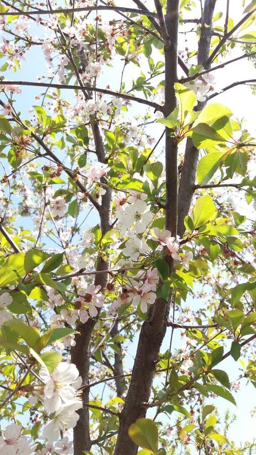 Ветвь солнечного дня и цветения стоковые изображения rf