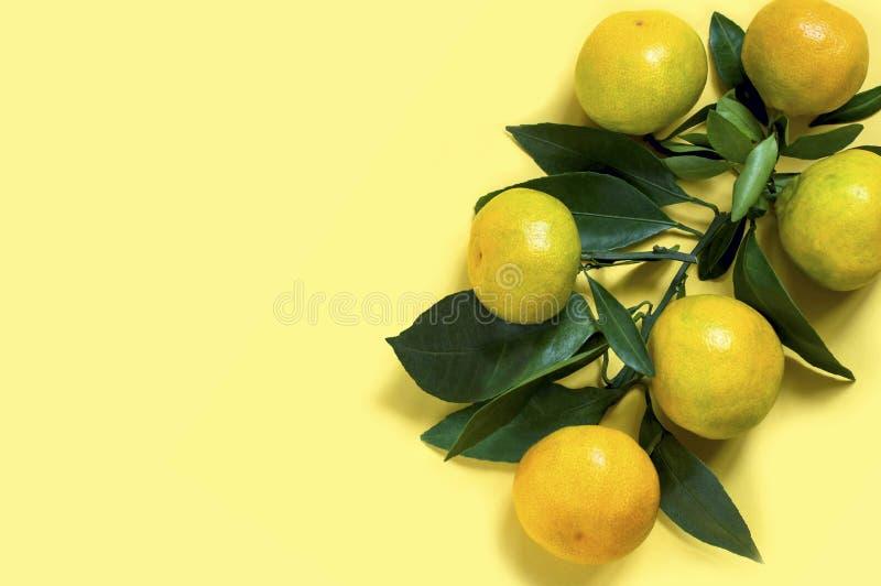 Ветвь со свежими органическими tangerines стоковое изображение rf
