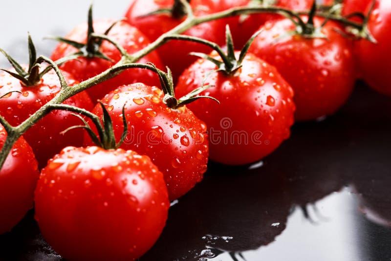 Ветвь томатов вишни стоковая фотография rf