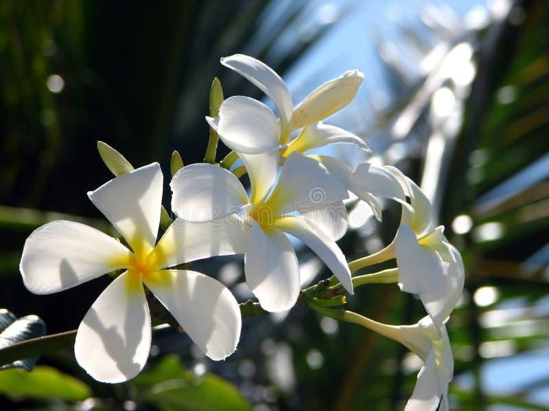 Ветвь тропических цветков стоковое изображение