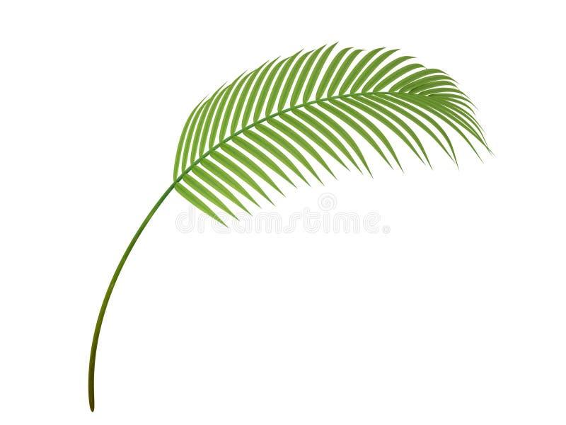 Ветвь тропического завода иллюстрация вектора