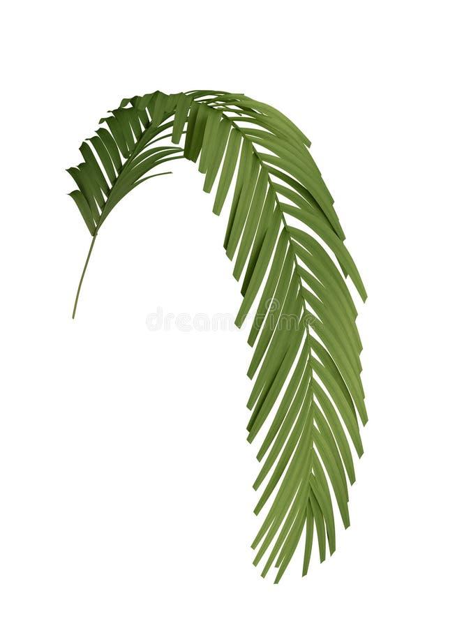 Ветвь тропического завода бесплатная иллюстрация
