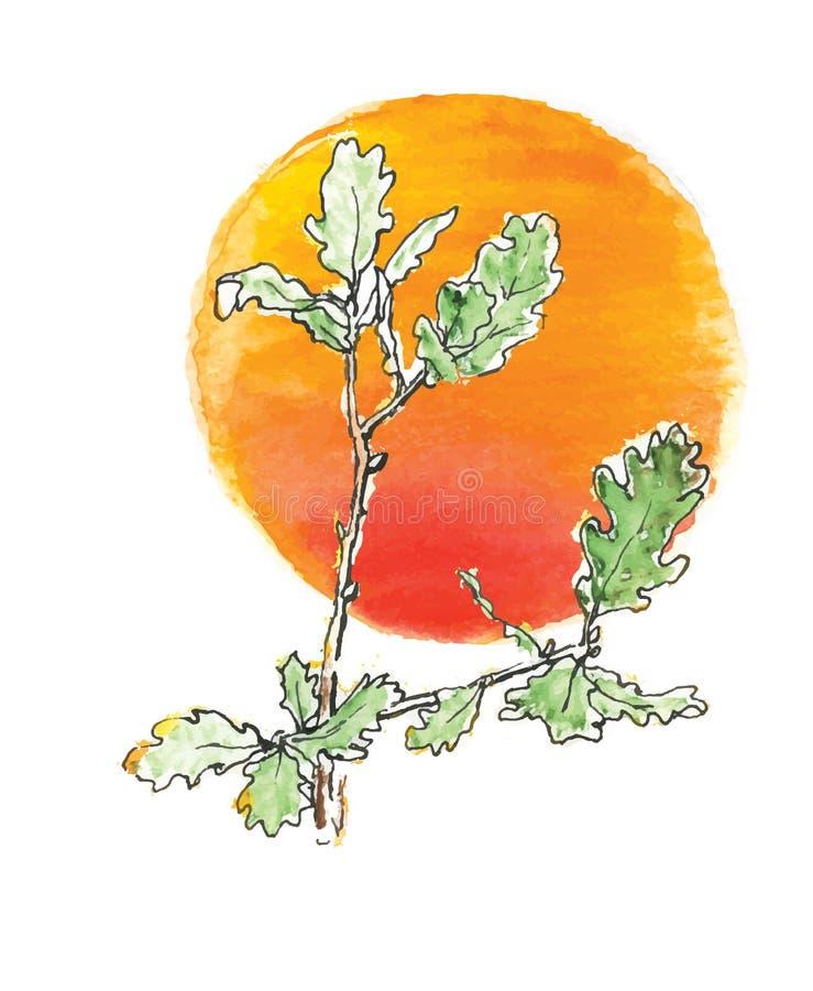 Ветвь дуба против солнца иллюстрация вектора