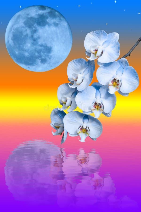 Ветвь цветка голубой орхидеи и большой голубой луны иллюстрация штока