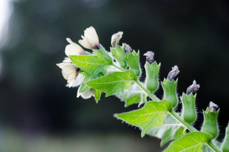 Ветвь цветка луга Вися колоколы Извлеките раскосно в расстояние стоковое изображение