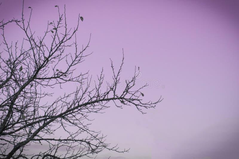 Ветвь Яблока стоковое изображение