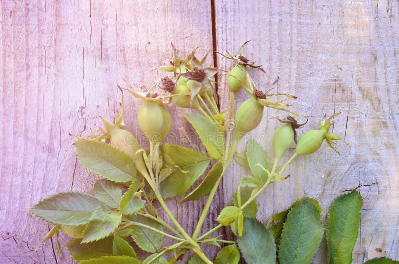 Ветвь briar с ягодами и листьями на деревянной предпосылке стоковая фотография