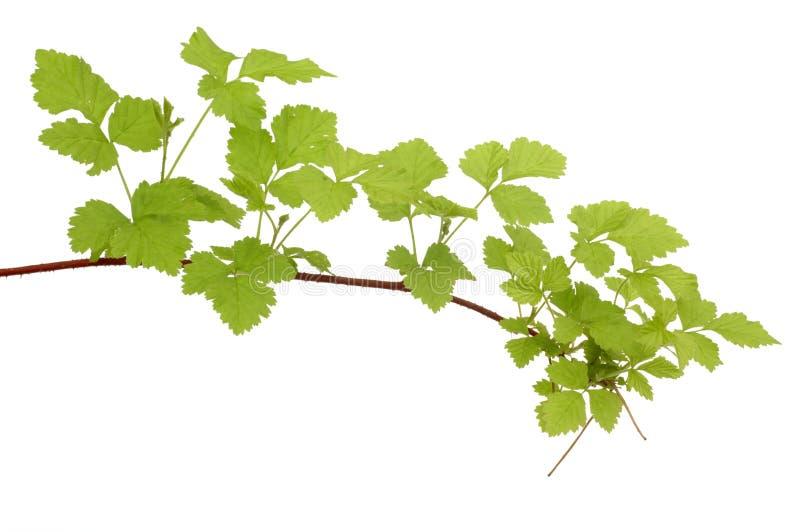Ветвь shrub пущи стоковая фотография rf