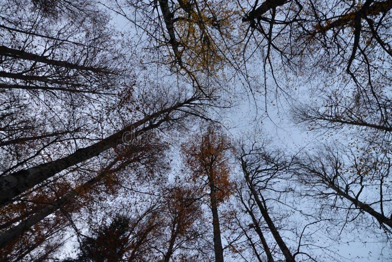 ветвь sky's стоковое изображение