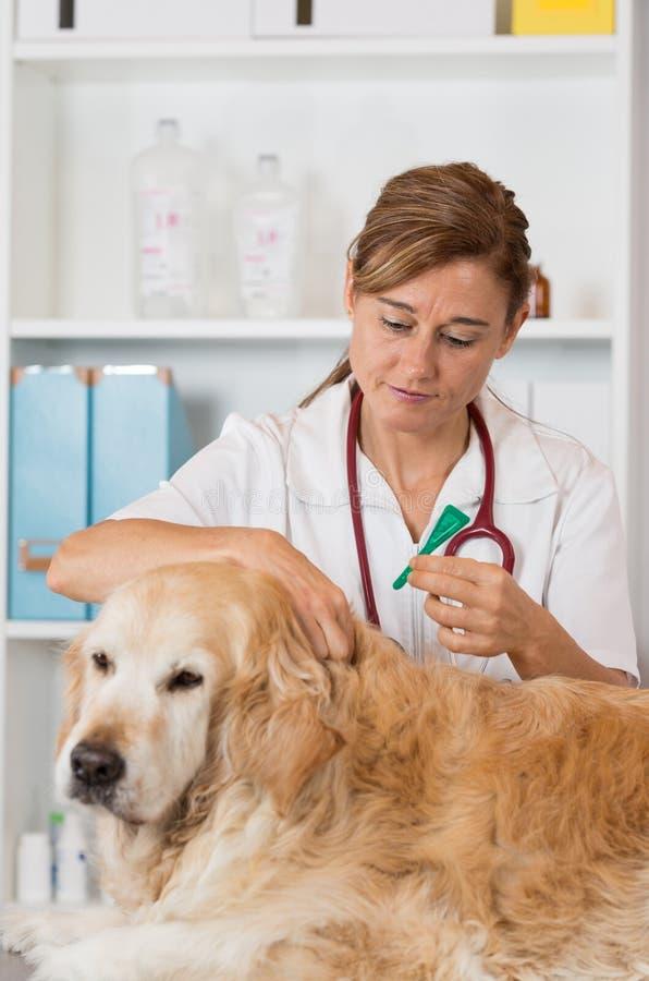 Ветеринарная клиника стоковые фото