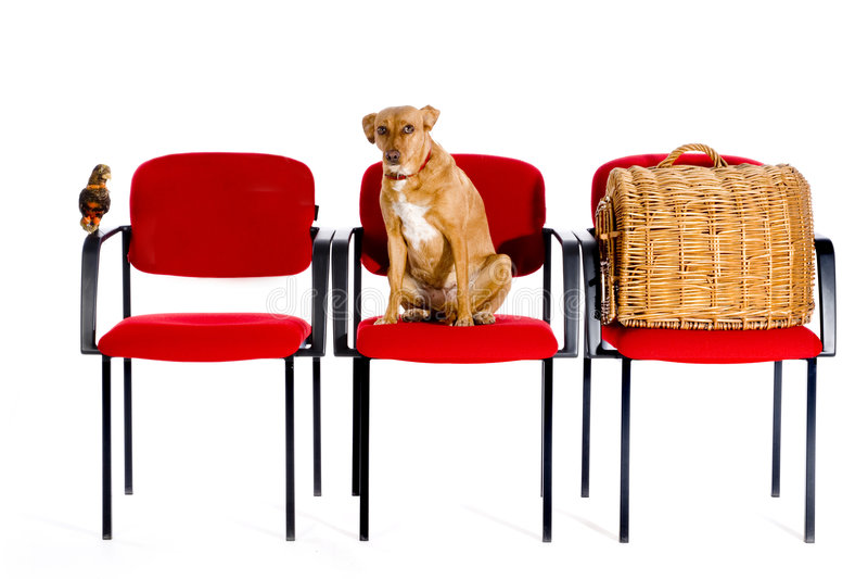 ветеринарное waitingroom стоковые изображения rf