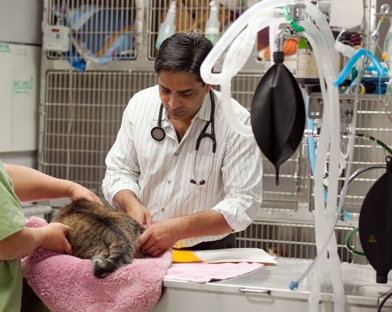 ветеринар кота рассматривая стоковые фото