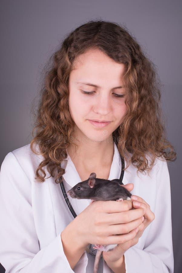 Ветеринар молодой женщины стоковые фотографии rf