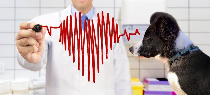 Ветеринар на клинике стоковая фотография rf