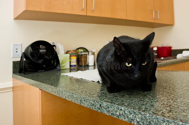 ветеринар офиса s стоковое фото rf