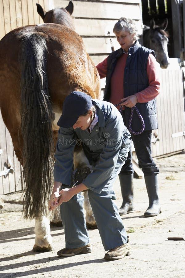 ветеринар предпринимателя лошади обсуждения стоковая фотография