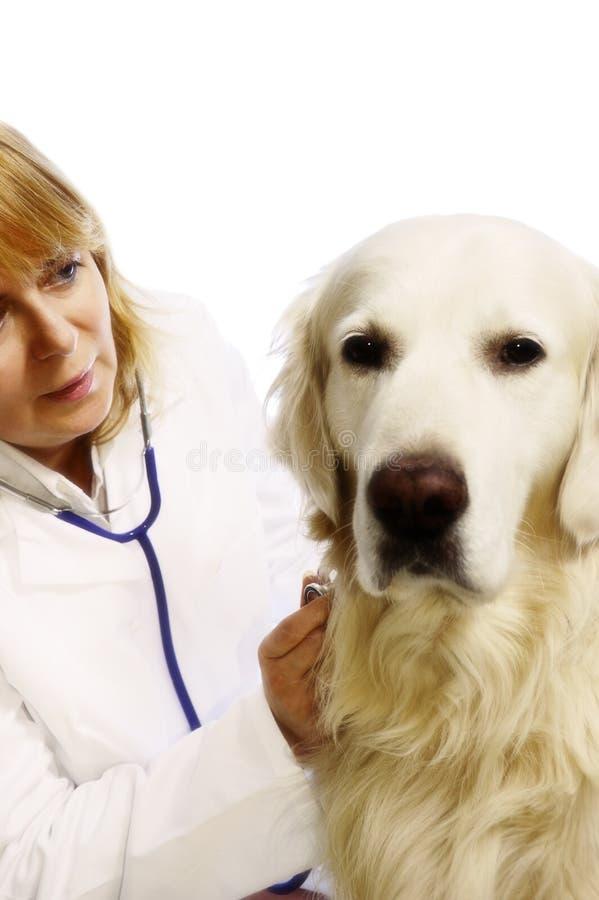 ветеринар собаки