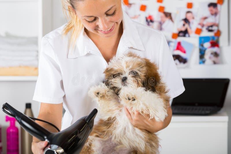 Ветеринар с его собакой Shih Tzu стоковое изображение