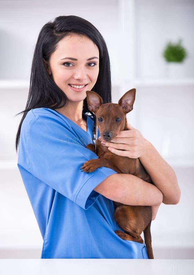 ветеринар стоковое изображение