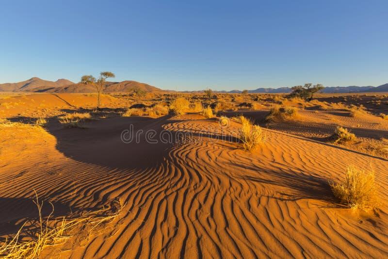 Ветер подмел картины на дюне стоковые фото