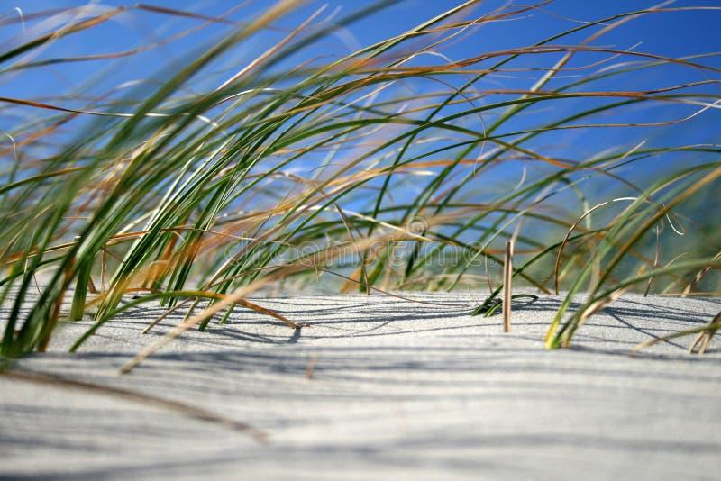 ветер травы пляжа стоковое фото rf
