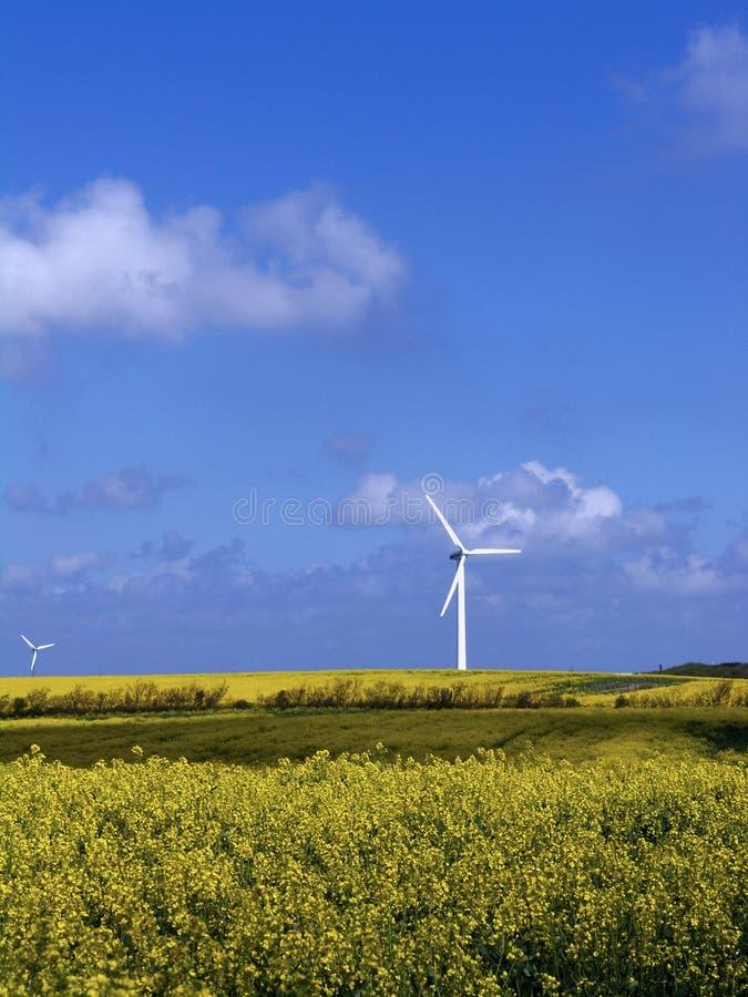 ветер турбины рапса поля стоковая фотография