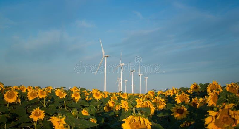 ветер турбин солнцецветов стоковые фотографии rf