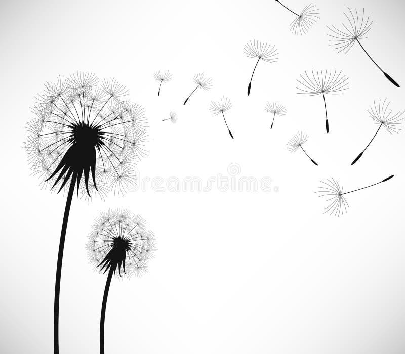 ветер цветка одуванчика дуновения иллюстрация вектора