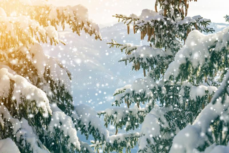 ветка елки с зелеными иглами и конусами, покрытыми глубоким снегом, а Ñ'Ð стоковые изображения