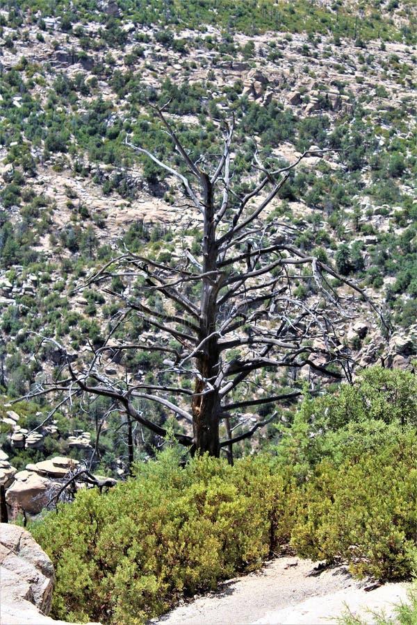 Ветреная перспектива пункта, держатель Lemmon, горы Санта Каталины, национальный лес Линкольна, Tucson, Аризона, Соединенные Штат стоковые фото
