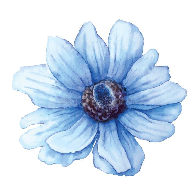 Ветреница вектора голубая в стиле акварели изолированная на белой предпосылке Цветок выреза для предпосылки, текстуры, картины иллюстрация вектора