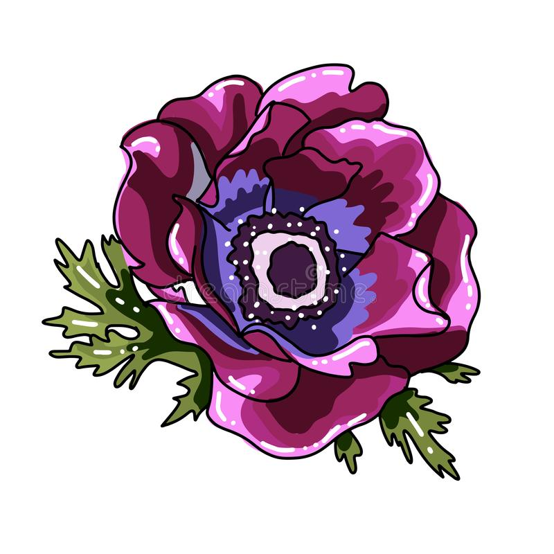 Ветреница одиночной сильной руки вычерченная покрашенная Пурпурный цветок с черной линией путем, концом-вверх, на белой предпосыл иллюстрация вектора